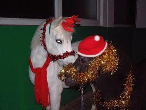 weihnachtsponies-klein