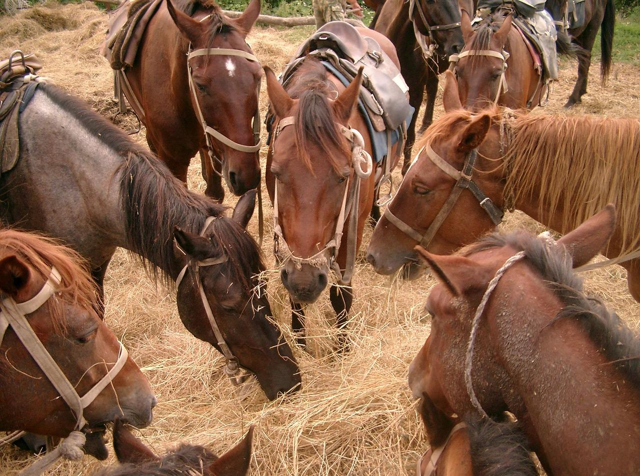Pferde im Heu